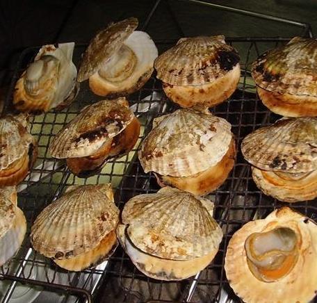 扇貝王海鮮燒烤加盟