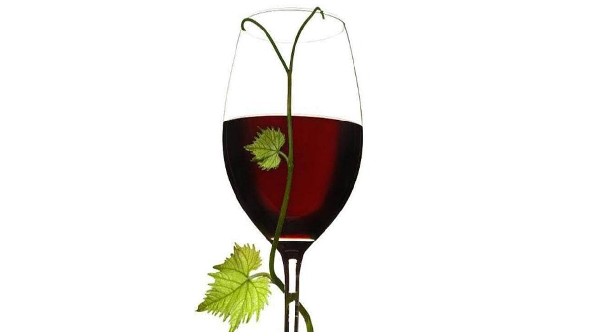 枫歌拉葡萄酒加盟