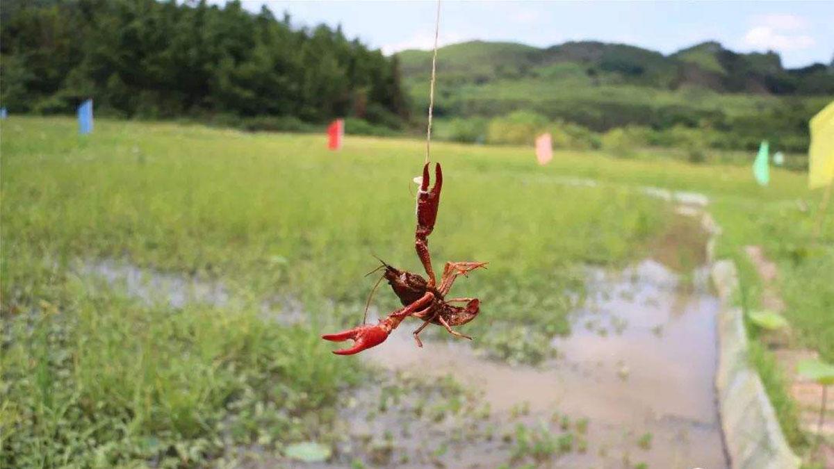 河里活小龙虾加盟
